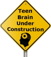 teen brain under construction