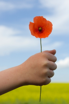 Child holding poppy
