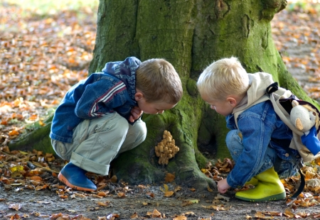 Two brothers looking at a group of mushrooms.